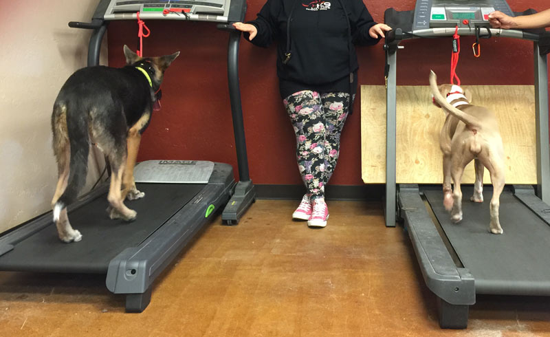 Indoor Dog Exercise Ideas